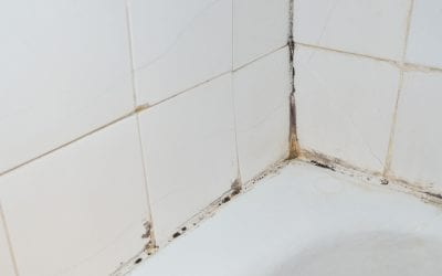 4 Ways to Spot Mold in the Home